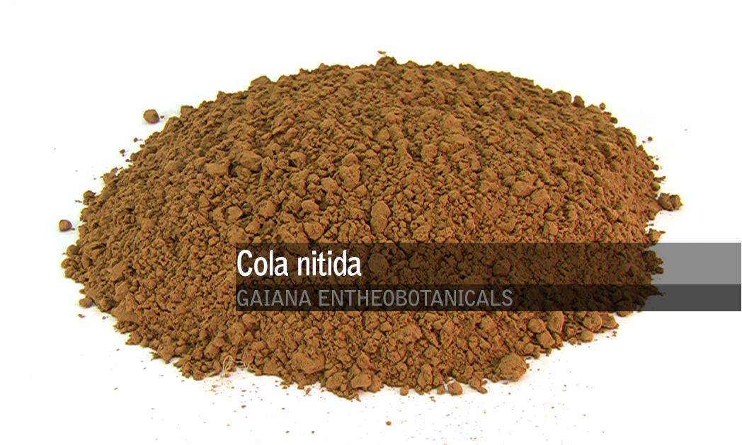 Cola nitida -Kola Nut-