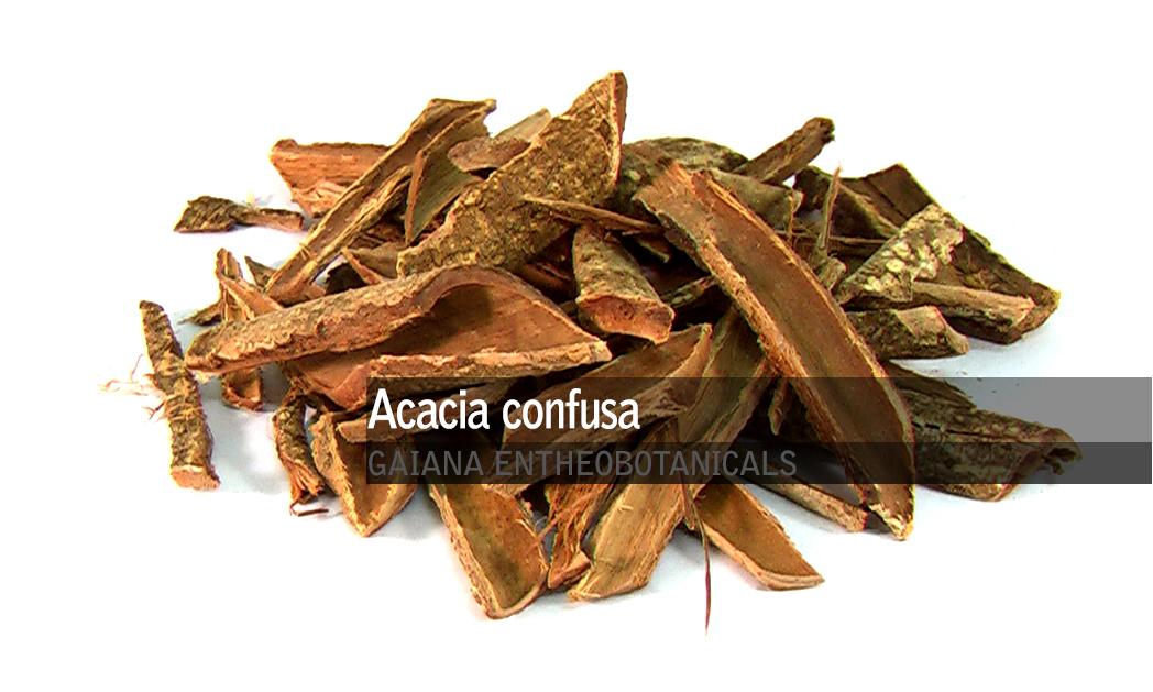 Acacia confusa -Root Bark-